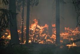 Власти Крыма ограничили посещение лесов